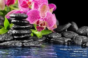 Каталог фотопечати - Орхидеи